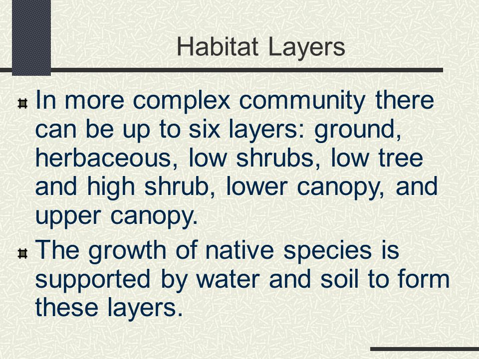 Habitat Layers In more complex community there can be up to six layers: ground, herbaceous, low shrubs, low tree and high shrub, lower canopy, and upper canopy.