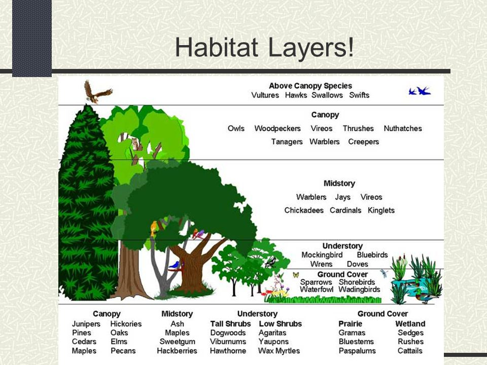 Habitat Layers!