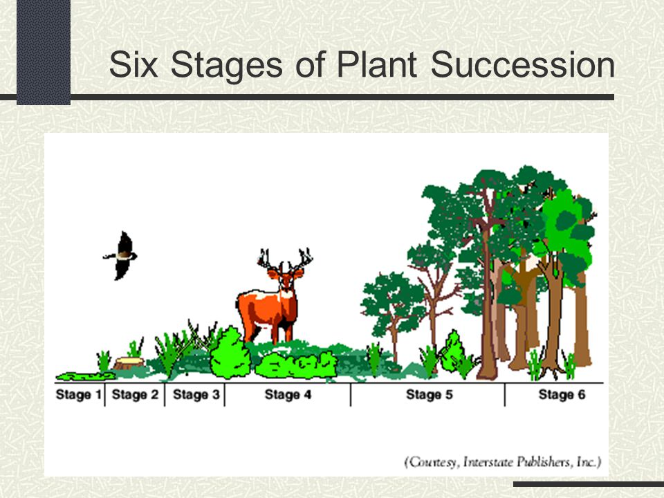 Six Stages of Plant Succession
