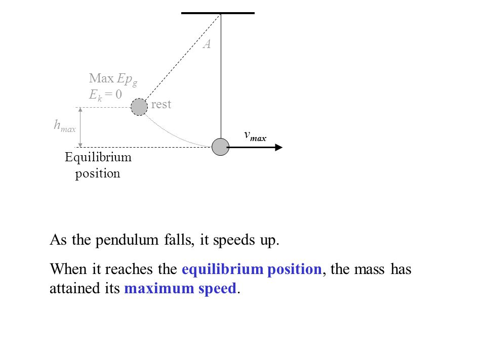 rest v max A h max Equilibrium position Max Ep g E k = 0 As the pendulum falls, it speeds up. When it reaches the equilibrium position, the mass has a