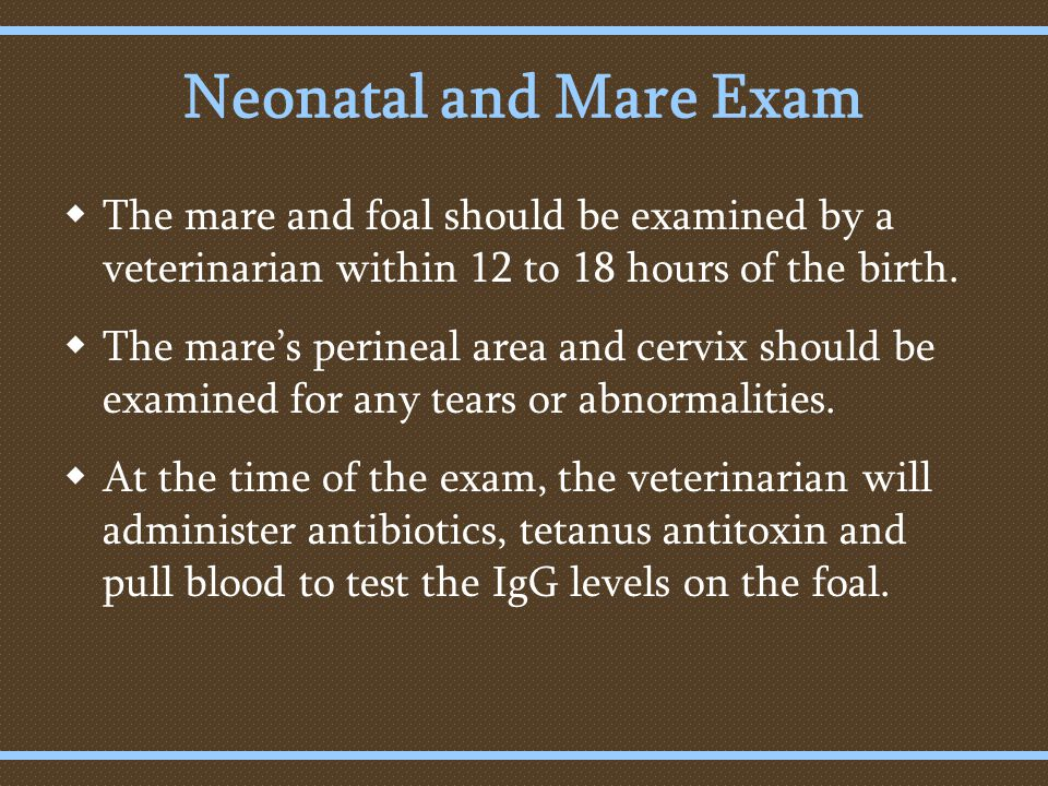Neonatal and Mare Exam  The mare and foal should be examined by a veterinarian within 12 to 18 hours of the birth.