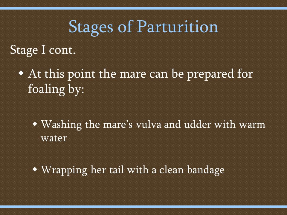Stages of Parturition  At this point the mare can be prepared for foaling by:  Washing the mare's vulva and udder with warm water  Wrapping her tail with a clean bandage Stage I cont.