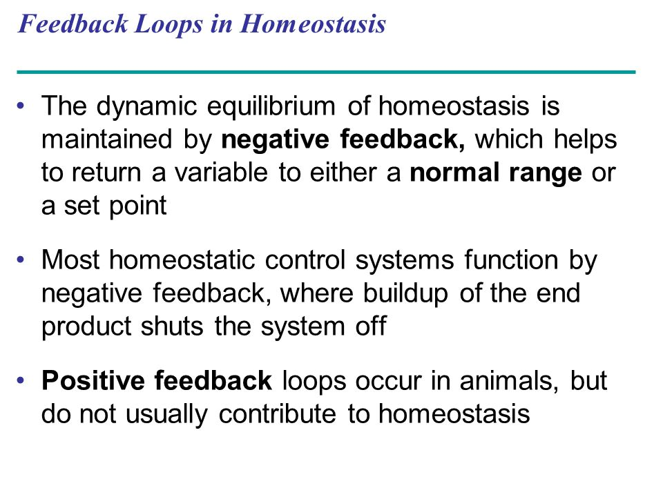 Feedback Loops in Homeostasis The dynamic equilibrium of homeostasis is maintained by negative feedback, which helps to return a variable to either a