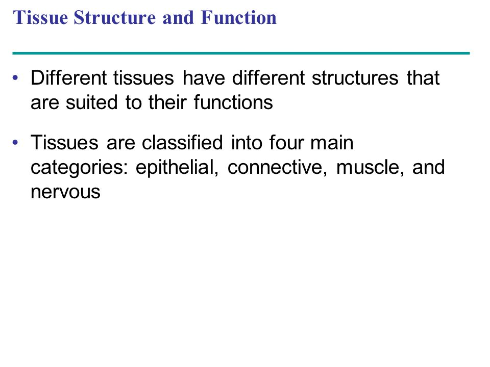 Different tissues have different structures that are suited to their functions Tissues are classified into four main categories: epithelial, connectiv