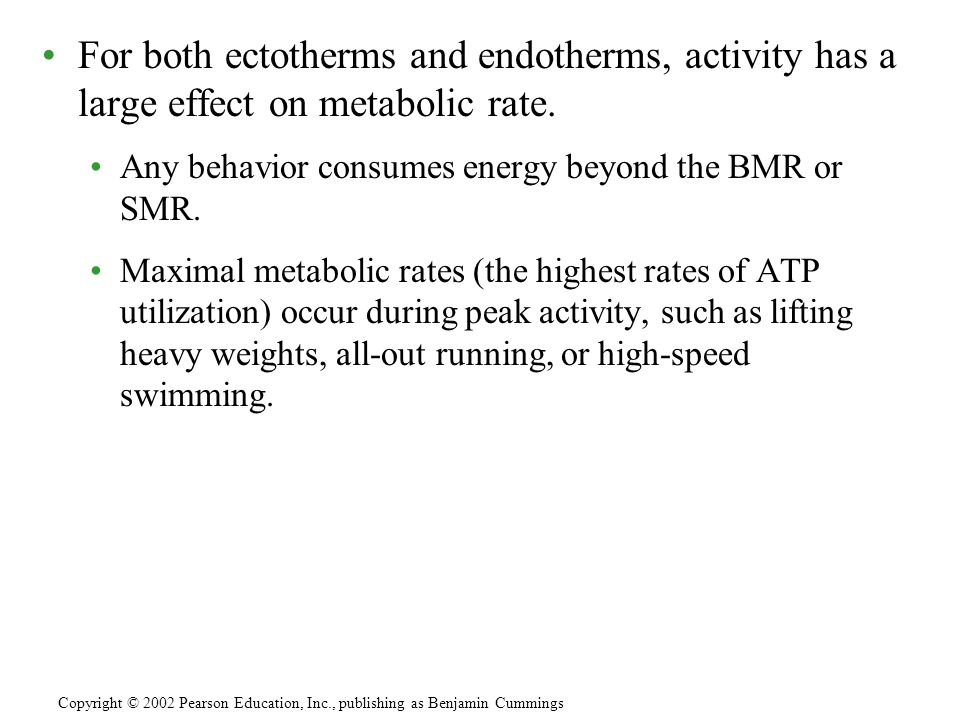 For both ectotherms and endotherms, activity has a large effect on metabolic rate. Any behavior consumes energy beyond the BMR or SMR. Maximal metabol