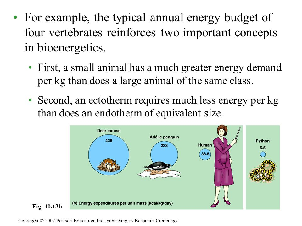 For example, the typical annual energy budget of four vertebrates reinforces two important concepts in bioenergetics. First, a small animal has a much