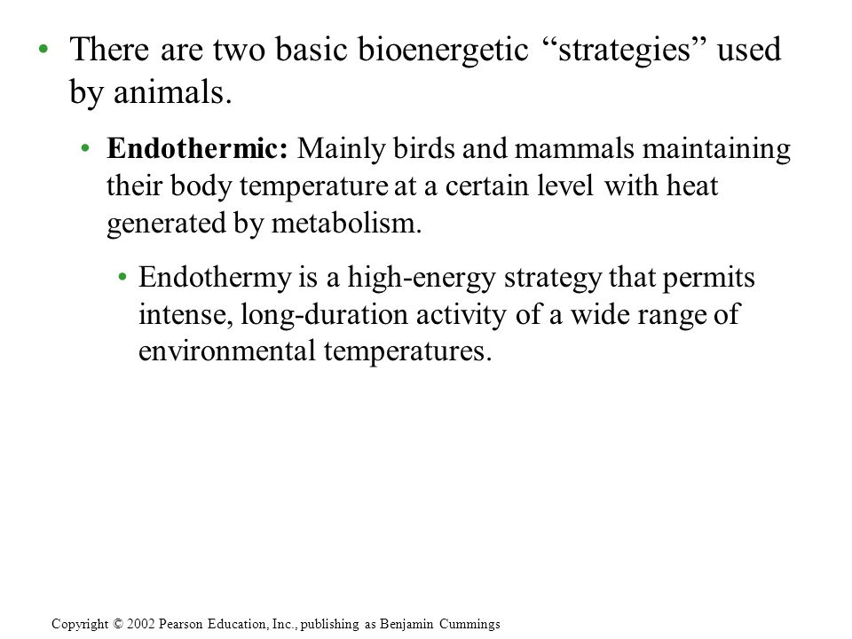 """There are two basic bioenergetic """"strategies"""" used by animals. Endothermic: Mainly birds and mammals maintaining their body temperature at a certain l"""