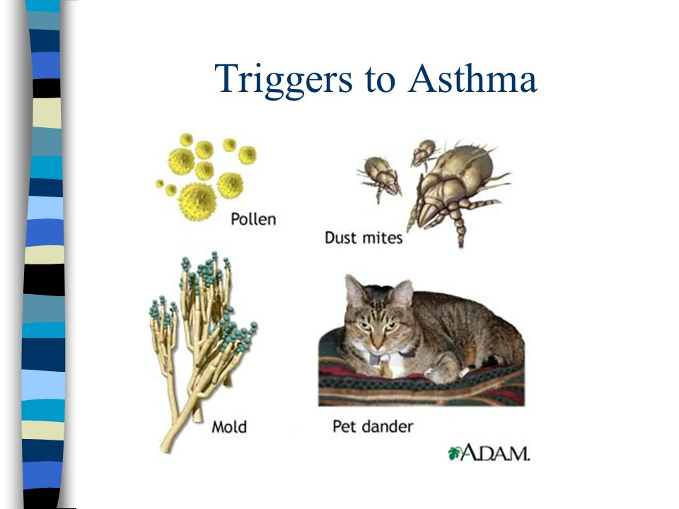 Triggers to Asthma