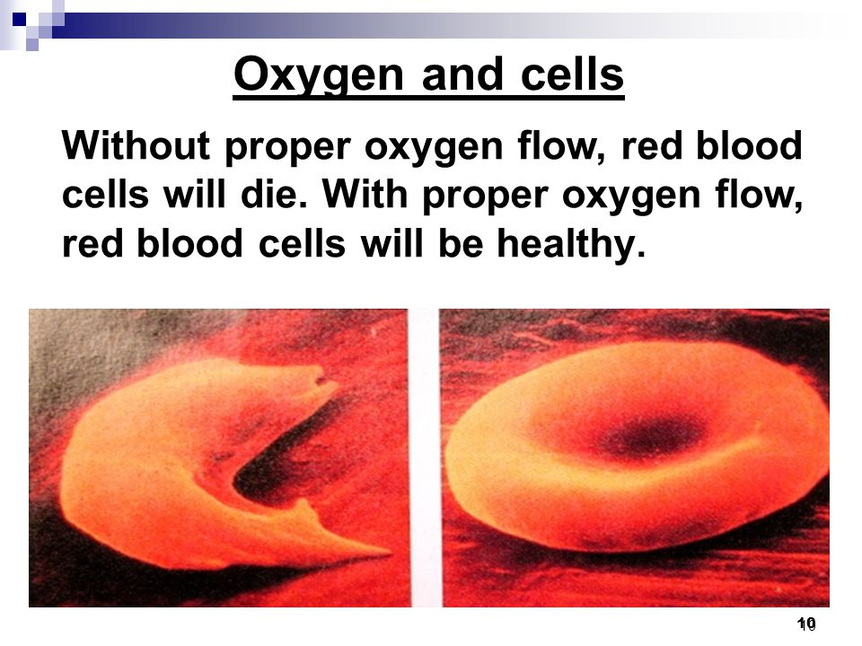 10 Without proper oxygen flow, red blood cells will die.