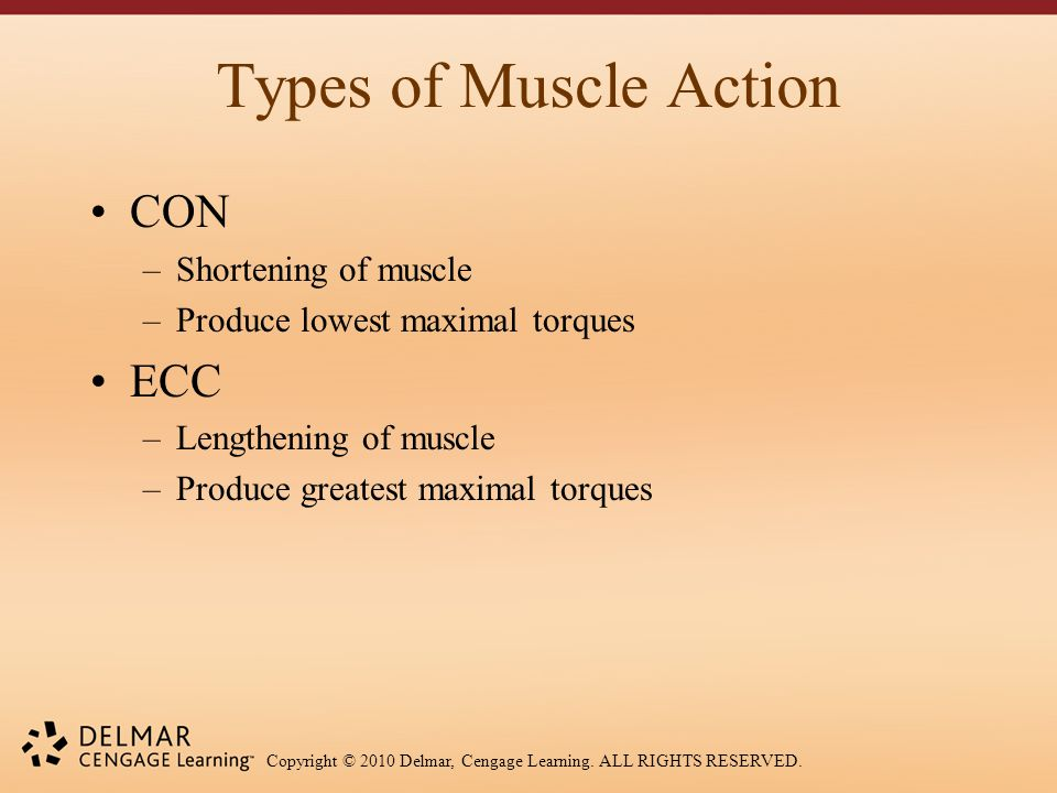 Copyright © 2010 Delmar, Cengage Learning. ALL RIGHTS RESERVED. Types of Muscle Action CON –Shortening of muscle –Produce lowest maximal torques ECC –