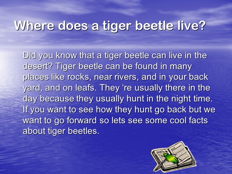 Where does a tiger beetle live. Did you know that a tiger beetle can live in the desert.
