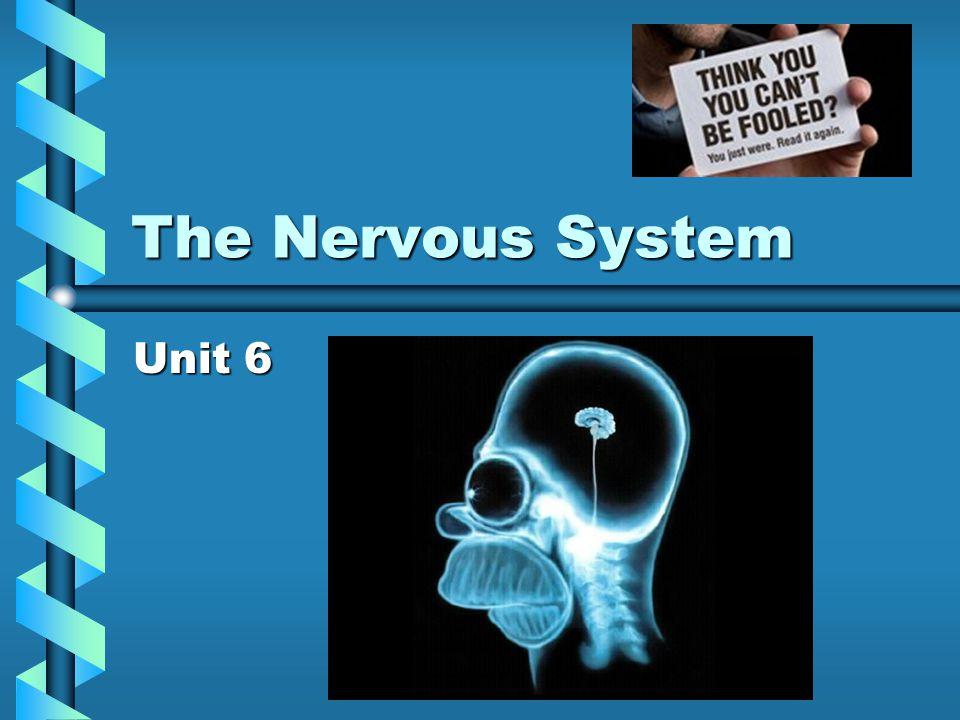 The Nervous System Unit 6