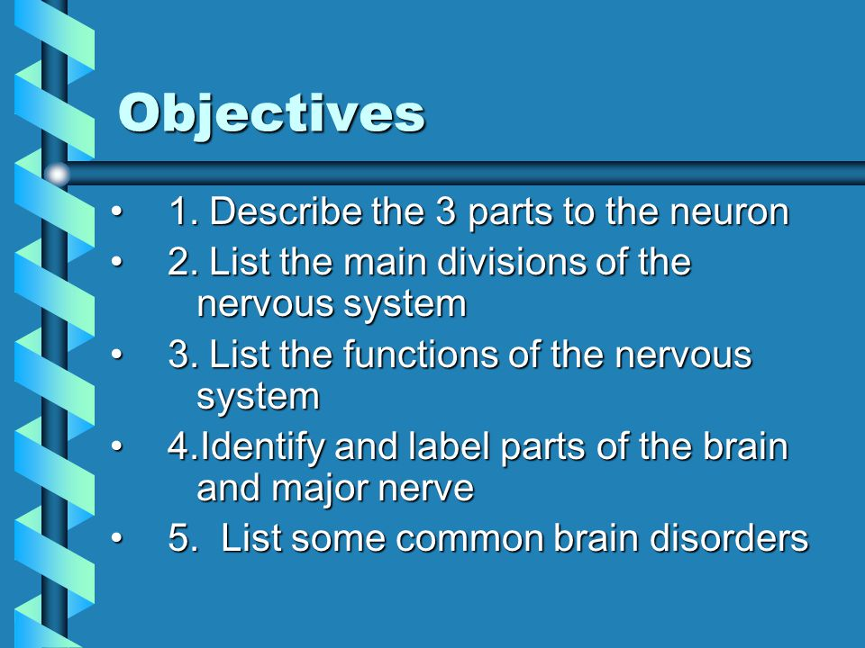Objectives 1.Describe the 3 parts to the neuron1.