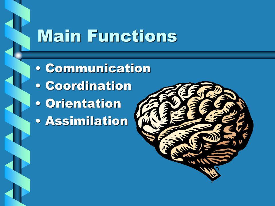 Hypothalamus Master Gland Location: Deep, inner portion of brainLocation: Deep, inner portion of brain Function: Regulates metabolism and glandsFunction: Regulates metabolism and glands