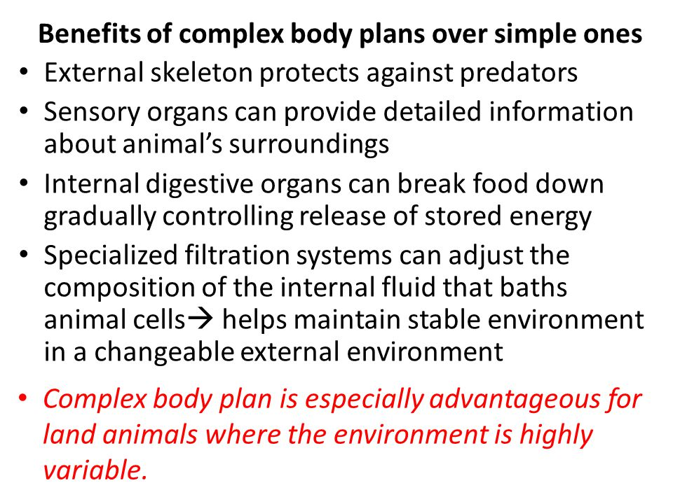 Benefits of complex body plans over simple ones External skeleton protects against predators Sensory organs can provide detailed information about animal's surroundings Internal digestive organs can break food down gradually controlling release of stored energy Specialized filtration systems can adjust the composition of the internal fluid that baths animal cells  helps maintain stable environment in a changeable external environment Complex body plan is especially advantageous for land animals where the environment is highly variable.