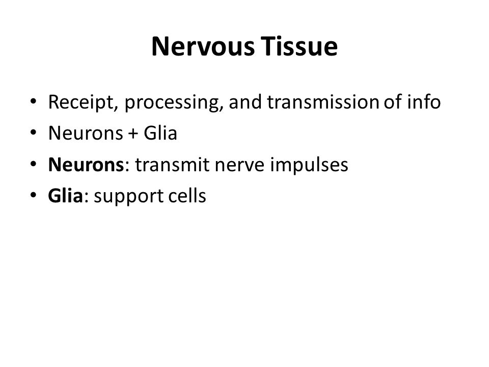 Nervous Tissue Receipt, processing, and transmission of info Neurons + Glia Neurons: transmit nerve impulses Glia: support cells