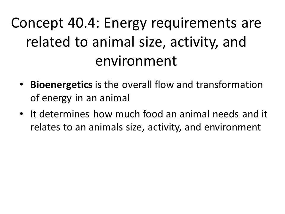 Concept 40.4: Energy requirements are related to animal size, activity, and environment Bioenergetics is the overall flow and transformation of energy in an animal It determines how much food an animal needs and it relates to an animals size, activity, and environment