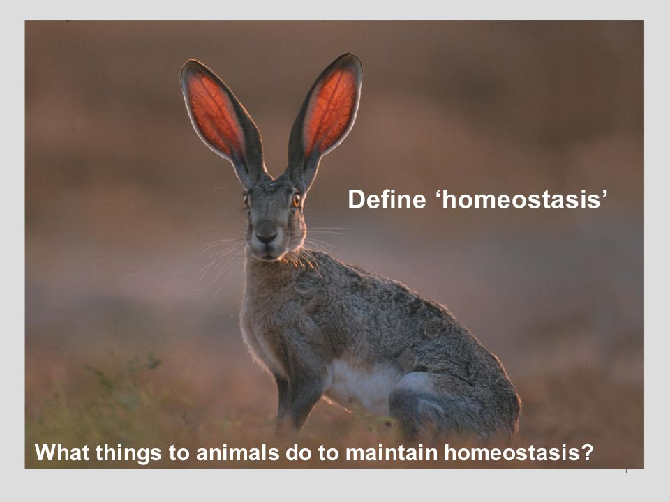 1 Define 'homeostasis' What things to animals do to maintain homeostasis?