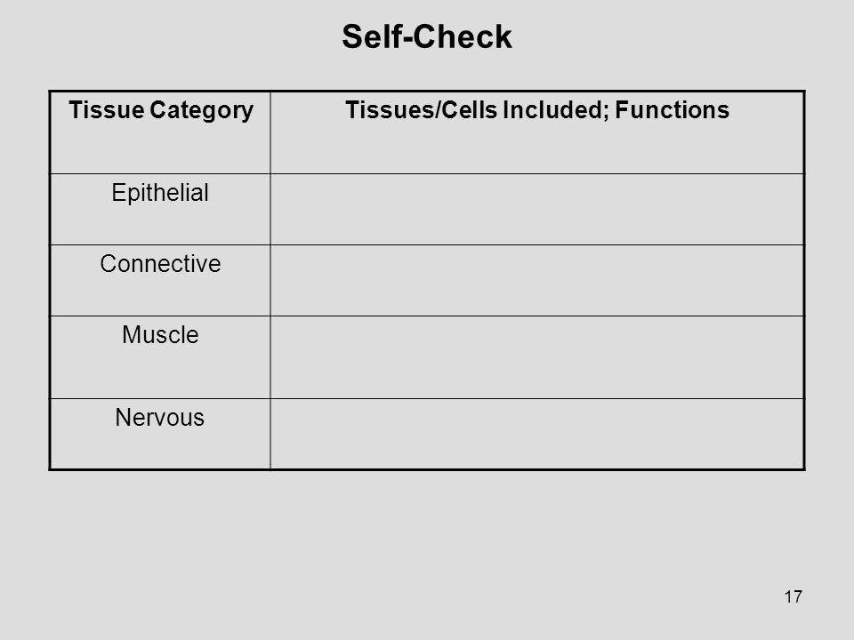 17 Self-Check Tissue CategoryTissues/Cells Included; Functions Epithelial Connective Muscle Nervous