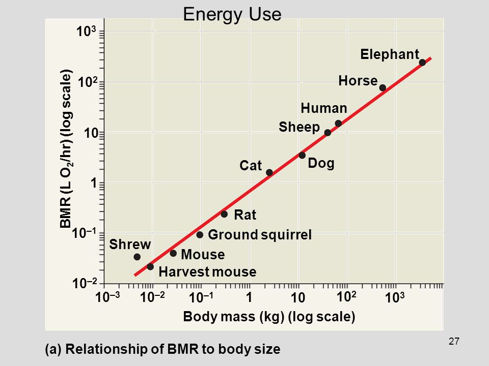 27 Shrew Harvest mouse Mouse Ground squirrel Rat Cat Dog Sheep Human Horse Elephant Body mass (kg) (log scale) BMR (L O 2 /hr) (log scale) (a) Relatio