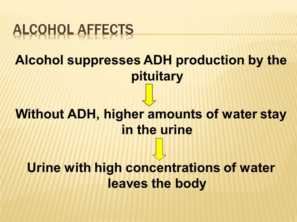 Alcohol suppresses ADH production by the pituitary Without ADH, higher amounts of water stay in the urine Urine with high concentrations of water leaves the body