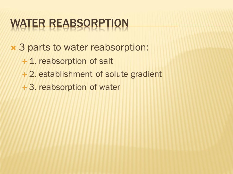  3 parts to water reabsorption:  1. reabsorption of salt  2.