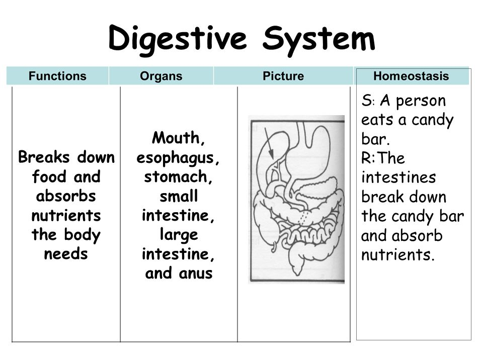 Breaks down food and absorbs nutrients the body needs Mouth, esophagus, stomach, small intestine, large intestine, and anus Digestive System S : A per