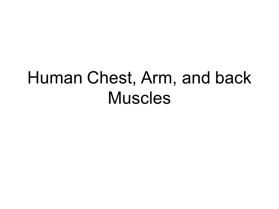Human Chest, Arm, and back Muscles