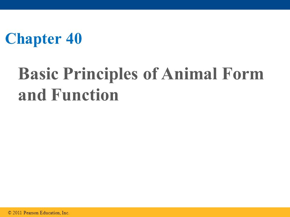 Concept 40.4: Energy requirements are related to animal size, activity, and environment Bioenergetics ( 생물에너지학 ) is the overall flow and transformation of energy in an animal It determines how much food an animal needs and it relates to an animal's size, activity, and environment © 2011 Pearson Education, Inc.