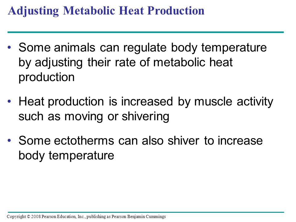 Adjusting Metabolic Heat Production Some animals can regulate body temperature by adjusting their rate of metabolic heat production Heat production is increased by muscle activity such as moving or shivering Some ectotherms can also shiver to increase body temperature Copyright © 2008 Pearson Education, Inc., publishing as Pearson Benjamin Cummings