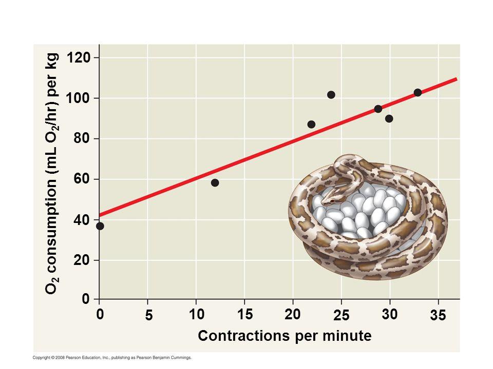 Contractions per minute O 2 consumption (mL O 2 /hr) per kg 0 0 20 1510 525 30 35 40 60 80 100 120