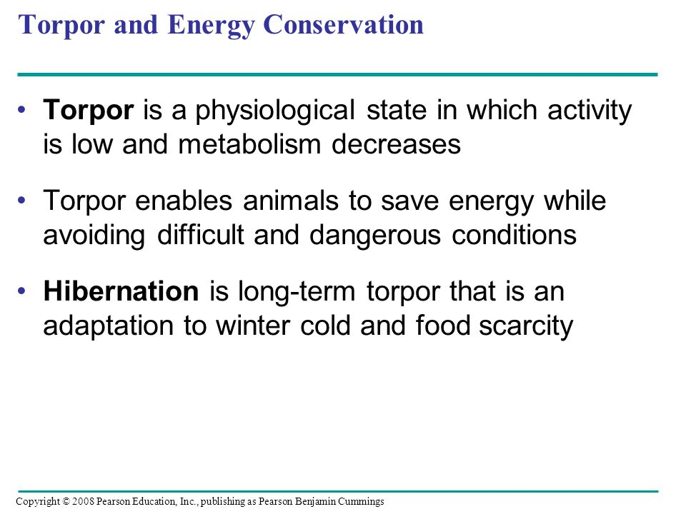 Torpor and Energy Conservation Torpor is a physiological state in which activity is low and metabolism decreases Torpor enables animals to save energy while avoiding difficult and dangerous conditions Hibernation is long-term torpor that is an adaptation to winter cold and food scarcity Copyright © 2008 Pearson Education, Inc., publishing as Pearson Benjamin Cummings