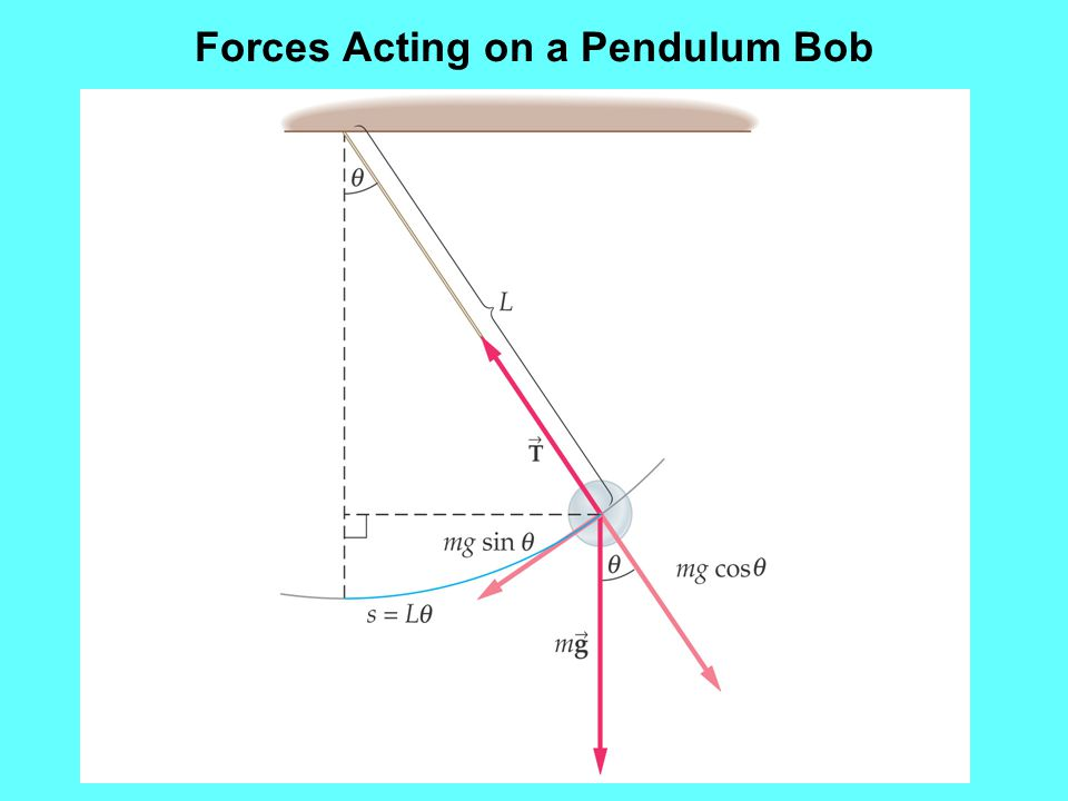 Forces Acting on a Pendulum Bob
