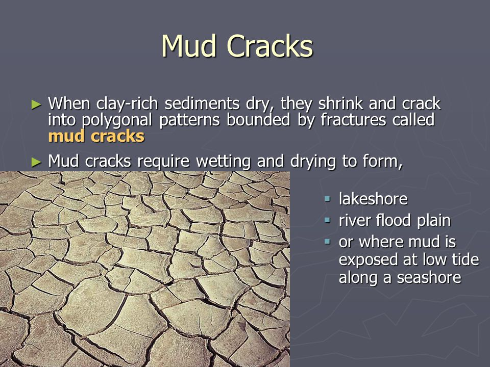 ► When clay-rich sediments dry, they shrink and crack into polygonal patterns bounded by fractures called mud cracks ► Mud cracks require wetting and