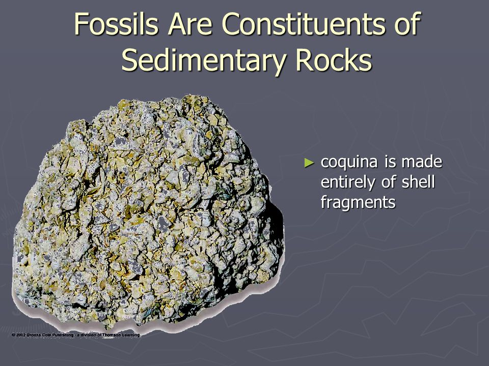 ► coquina is made entirely of shell fragments Fossils Are Constituents of Sedimentary Rocks