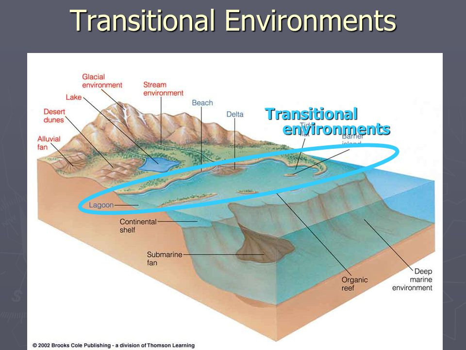 Transitional environments