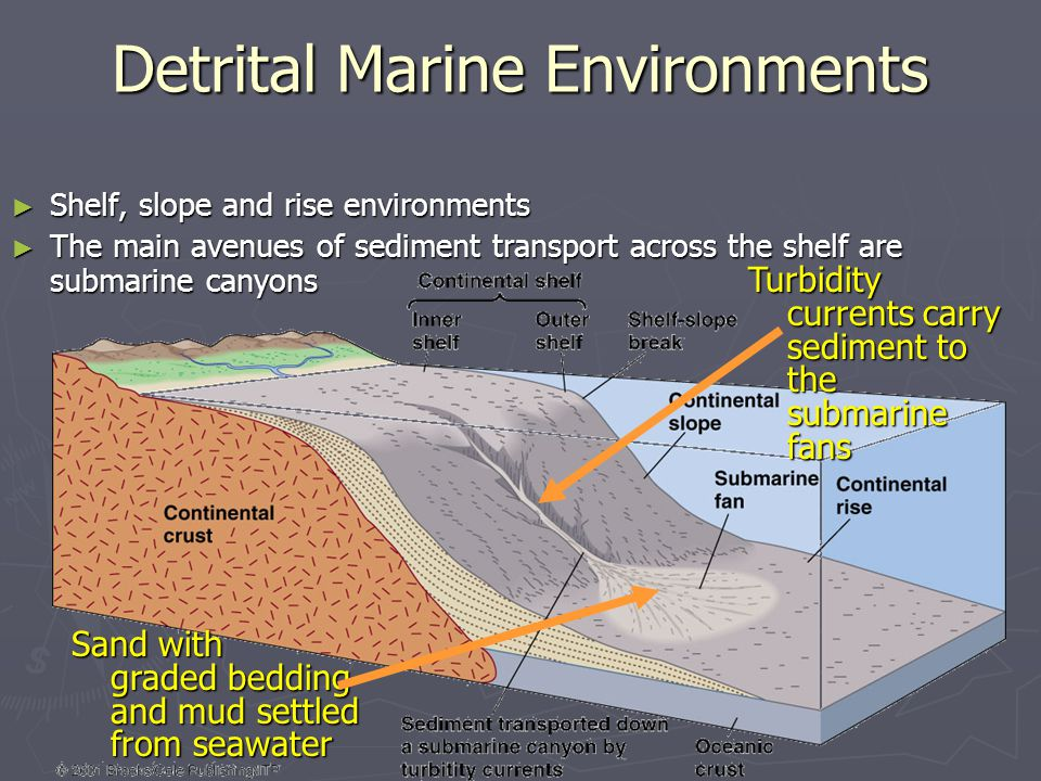 ► Shelf, slope and rise environments ► The main avenues of sediment transport across the shelf are submarine canyons Detrital Marine Environments Turb
