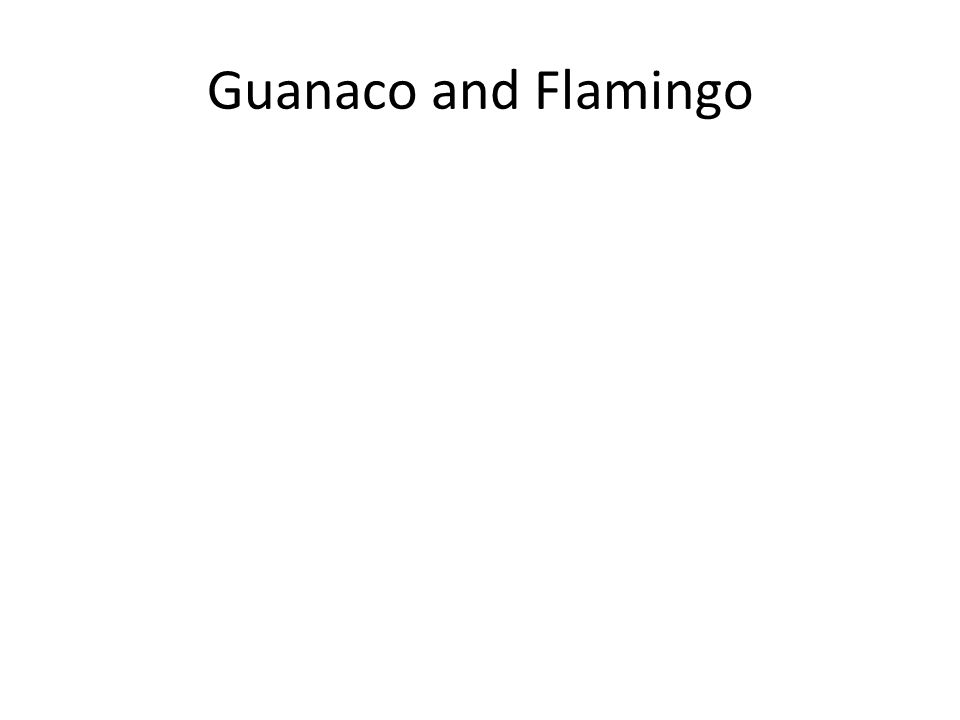 Guanaco and Flamingo