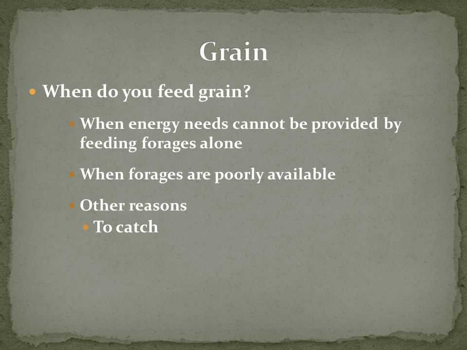 When do you feed grain? When energy needs cannot be provided by feeding forages alone When forages are poorly available Other reasons To catch