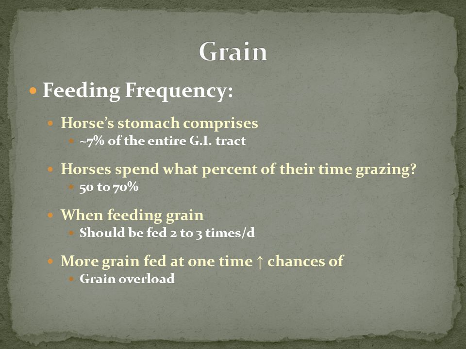 Feeding Frequency: Horse's stomach comprises ~7% of the entire G.I. tract Horses spend what percent of their time grazing? 50 to 70% When feeding grai