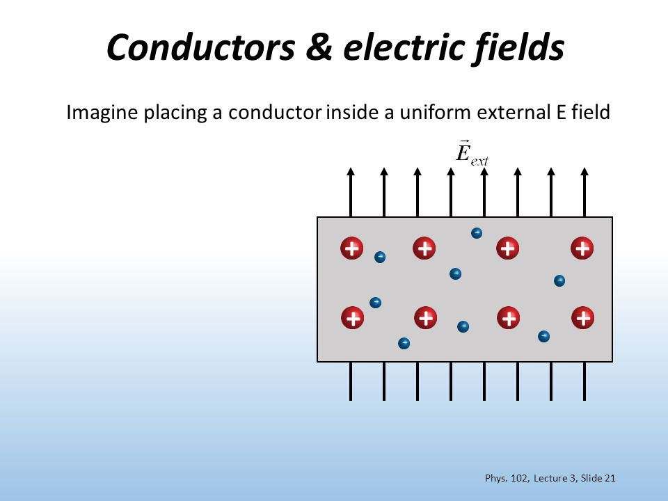 Conductors & electric fields – – – – – +++ ++ ++ Imagine placing a conductor inside a uniform external E field + – – – Phys.