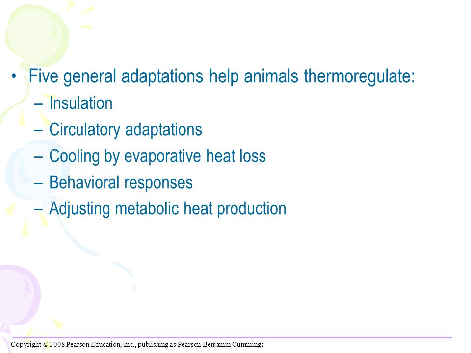 Five general adaptations help animals thermoregulate: –Insulation –Circulatory adaptations –Cooling by evaporative heat loss –Behavioral responses –Adjusting metabolic heat production Copyright © 2008 Pearson Education, Inc., publishing as Pearson Benjamin Cummings