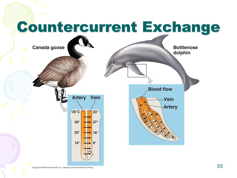 Countercurrent Exchange 55