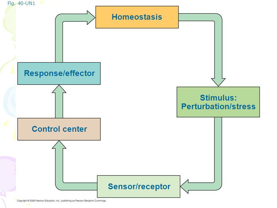 Fig. 40-UN1 Homeostasis Stimulus: Perturbation/stress Response/effector Control center Sensor/receptor