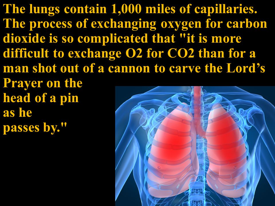 The lungs contain 1,000 miles of capillaries.