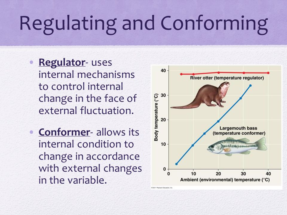 Regulating and Conforming Regulator- uses internal mechanisms to control internal change in the face of external fluctuation.