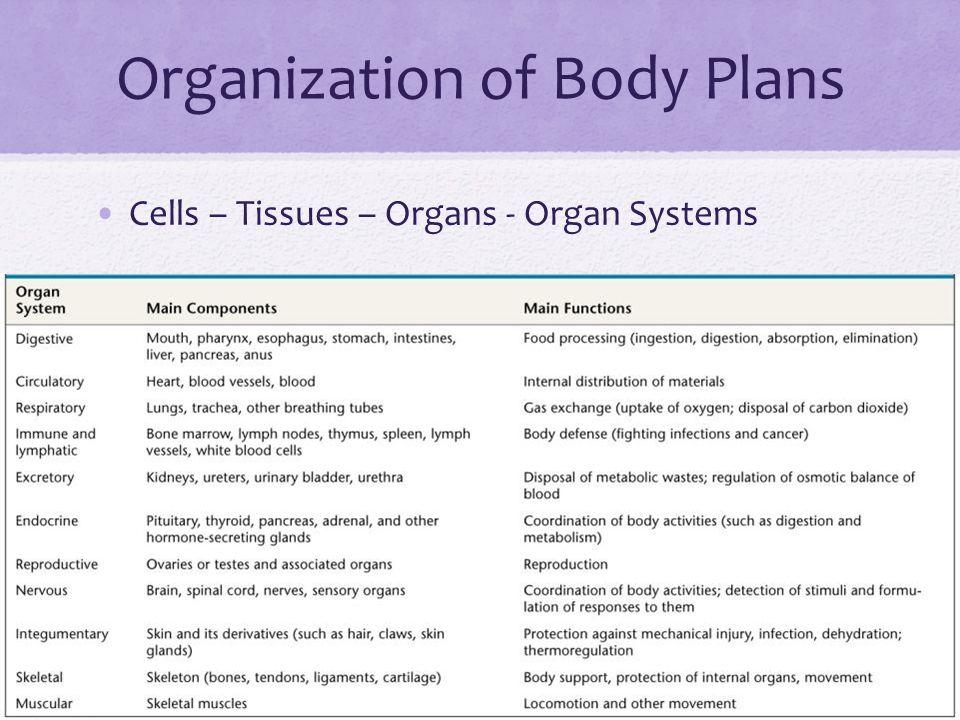 Organization of Body Plans Cells – Tissues – Organs - Organ Systems