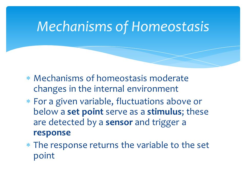  Mechanisms of homeostasis moderate changes in the internal environment  For a given variable, fluctuations above or below a set point serve as a st