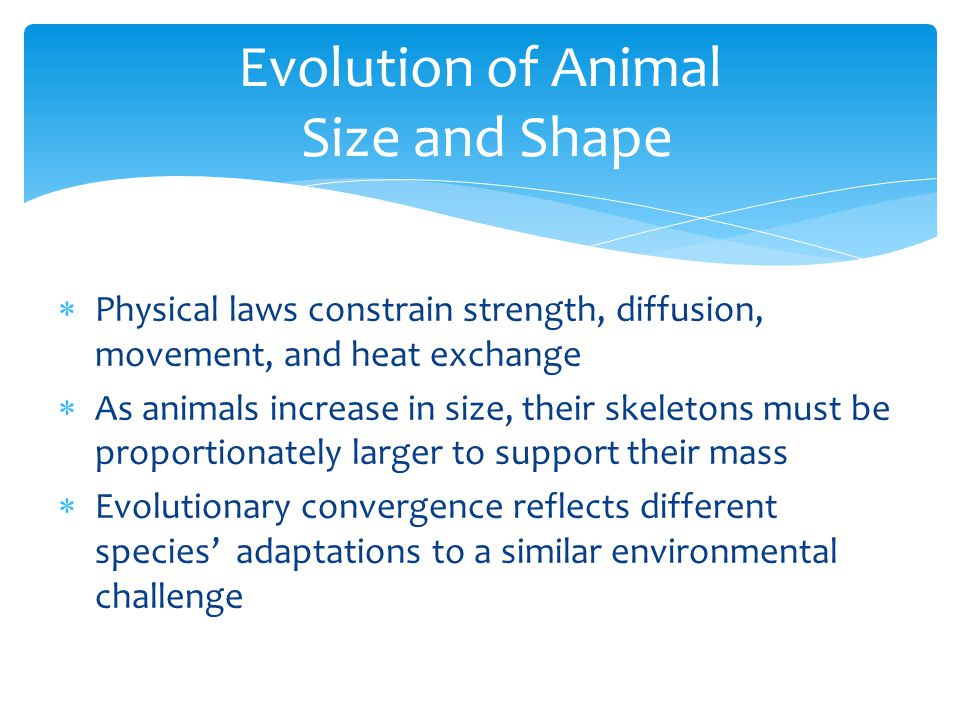  Physical laws constrain strength, diffusion, movement, and heat exchange  As animals increase in size, their skeletons must be proportionately larg
