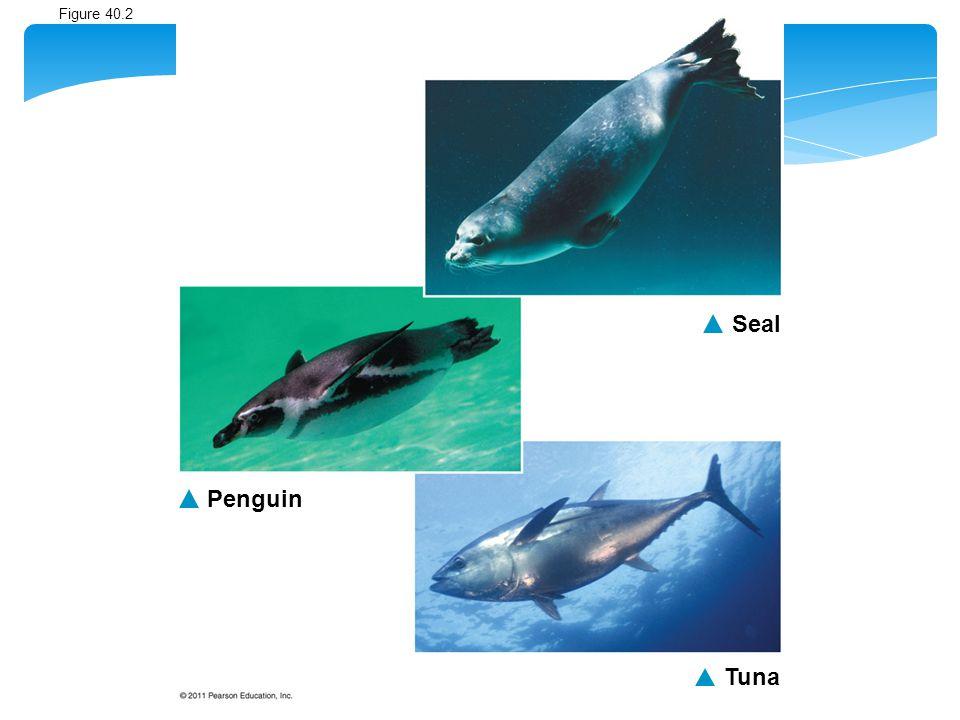Seal Tuna Penguin Figure 40.2